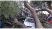 রংপুরে ডিসি বাসভবনের সামনে শতবর্ষী গাছ উপড়ে পড়ে ৬জন আহত