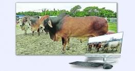 কোরবানির পশু কেনাবেচায় প্রস্তুত ই-কমার্স মার্কেটপ্লেস