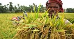 বাম্পার ফলনে গোলা ভরার পাশাপাশিধানের ভাল মূল্যও পাচ্ছে কৃষক